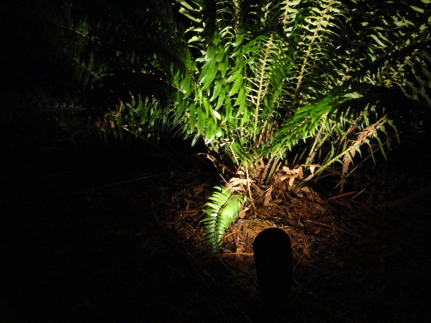 Landscape light shining on a fern