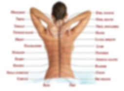 the-true-cause-of-pain-how-the-spine-is-