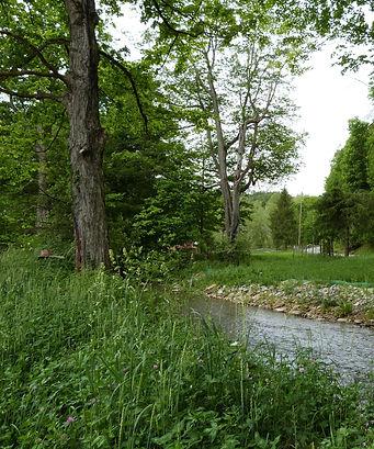 Cobun Creek 1.jpg