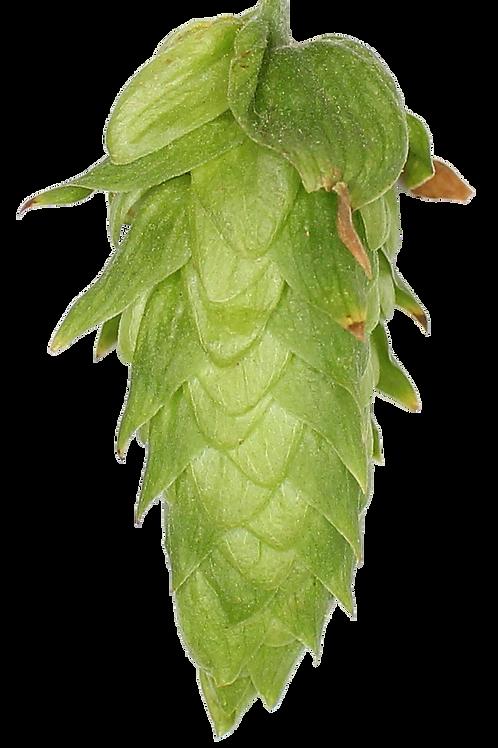 Cascade Hopsteiner