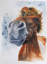 boscastle pony.jpg