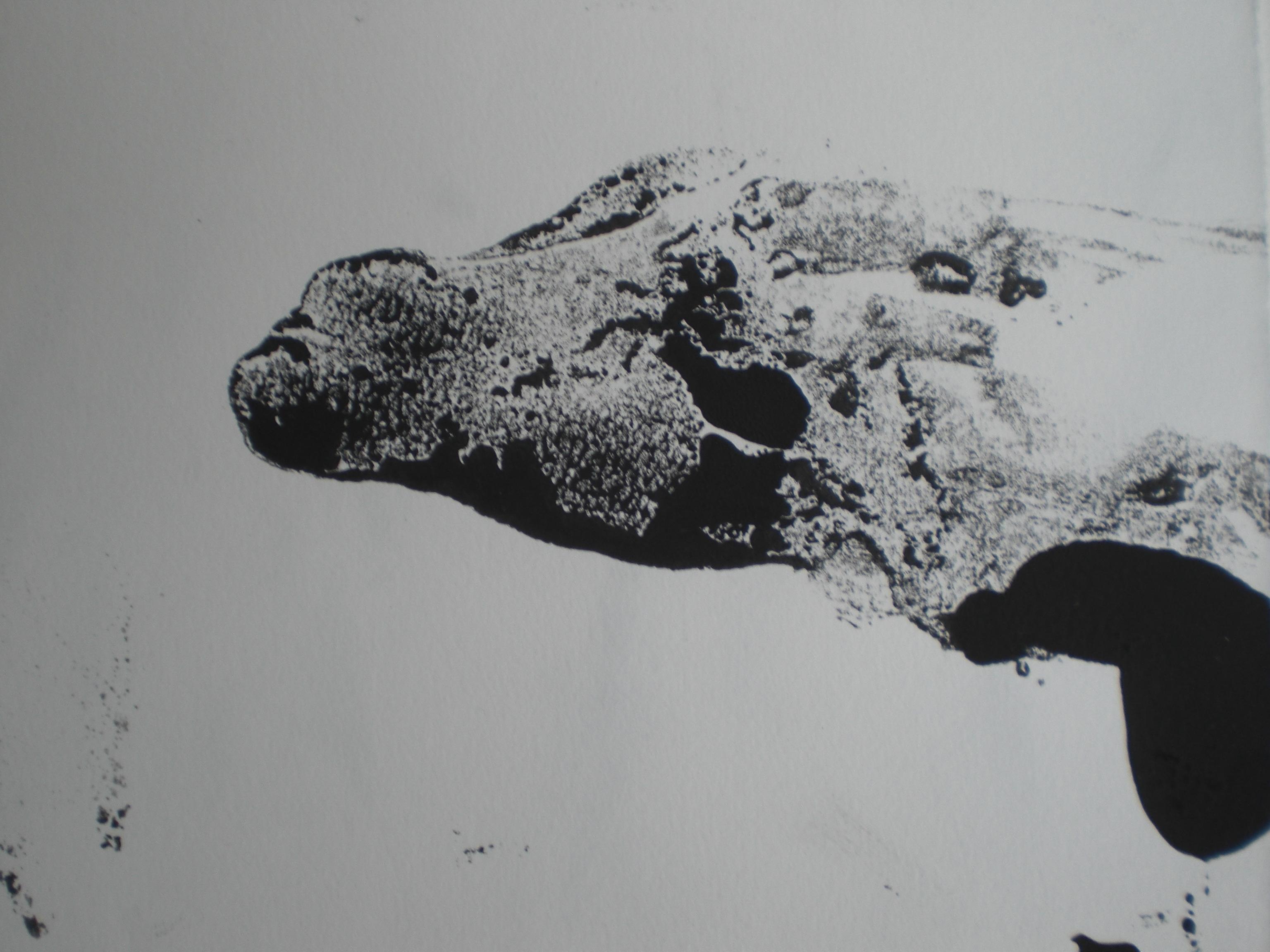 Monotype/papier
