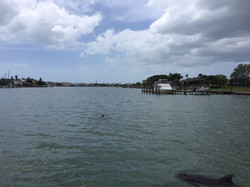 Dolphin Watching at Johns Pass