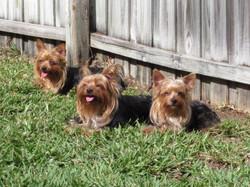 Nikki, Zoie, and Chip