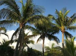 Sanibel Island, FL - Aug. 2017