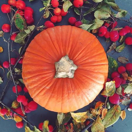Pumpkin autumn