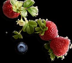 berry-vine_2x.png