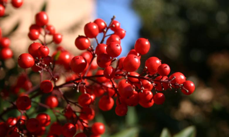 cranberries for skin care