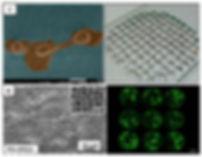 2) Research-Bioprinting.JPG