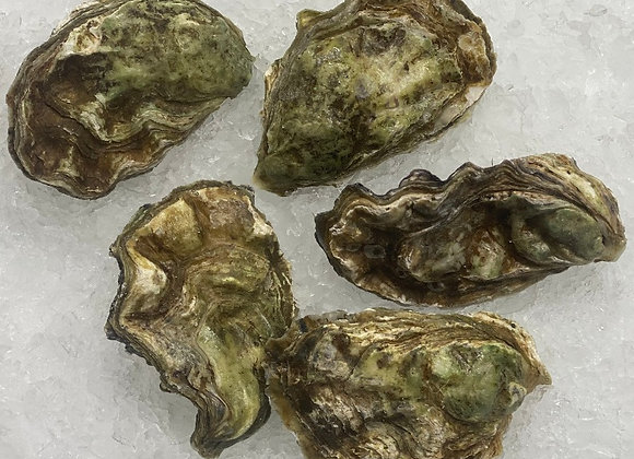 Oysters in the Shell - Choose 5,6,7 or 8 dozen