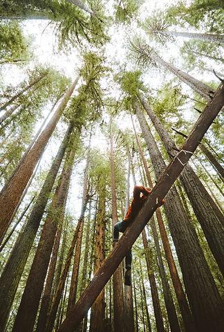 Redwood%2520National%2520Park%252C%2520California_edited_edited.jpg