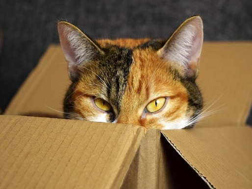 How many dead cats do you have in your sales pipeline? Why you need to be brave and look inside the