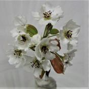 18 Nashi Pear - David Adams.jpg