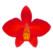 orchid kevin weston logo-200x200.png