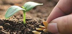 Diggers seedling.jpg