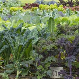 kale-in-organic-vegetable-garden.jpg