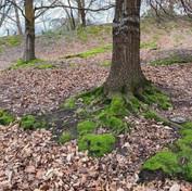 11 Moss under Oaks - Charles Sega.jpg