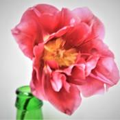 8 Tulip - Wan Leow .jpg
