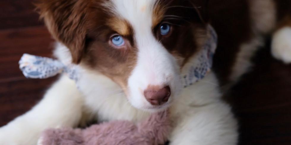 Puppy Start