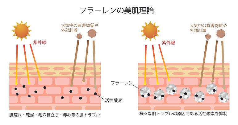 フラーレン 活性酸素 フリーラジカル