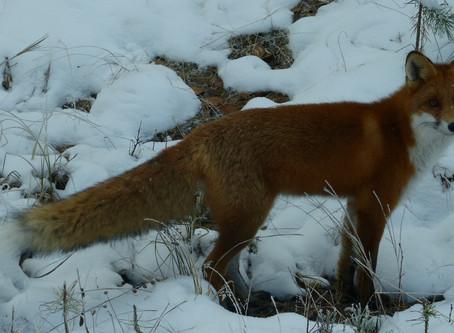 Coyote Teaching – Selbsterfahrung als Wegweiser