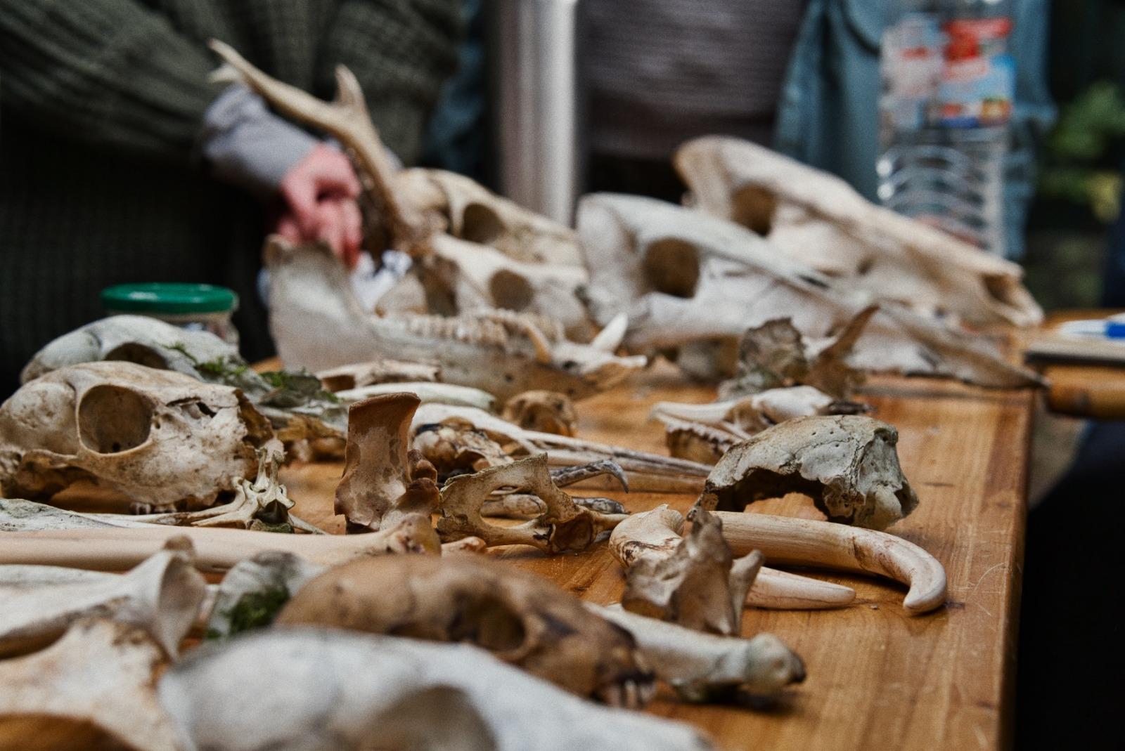 Knochen -und Schädelkunde