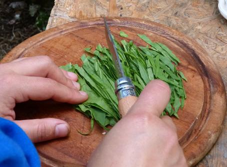 Essbare Wildpflanzen zubereiten - Rezepte und Vorschläge