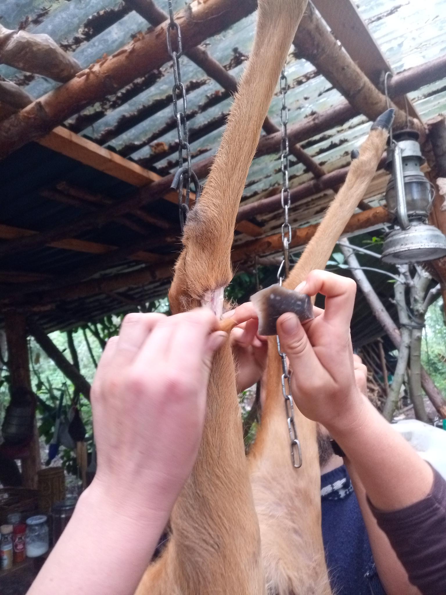 Tierverarbeitung