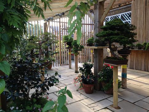 The Bonsai House