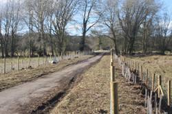 Hedge Restoration