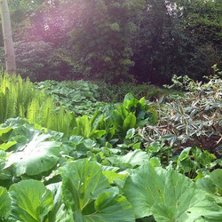 Pond margin plants romping away