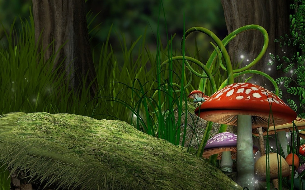 Mushroom Wallpapers and Background Image
