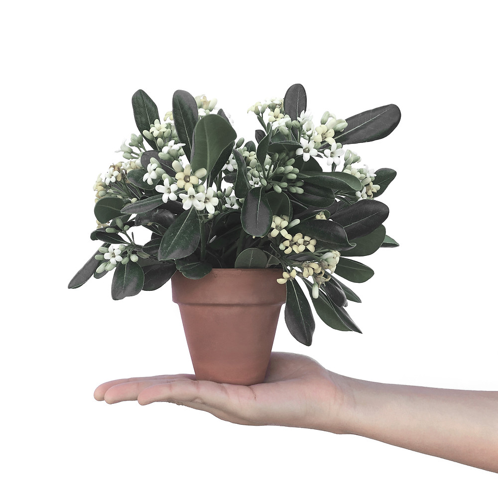Bitkiler bulunduğu ortama göre canlı kalmaya çalışır. Bitki yetiştirmek bize  şartlar ne olursa olsun; Hayatta sıkı sıkı tutunmayı,  emek vermeyi, sabır, ilgi ve canlılığı öğretir.