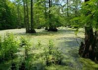 green muck harwoods.jpeg