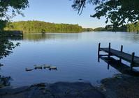 harwoods ducks and dock.jpg
