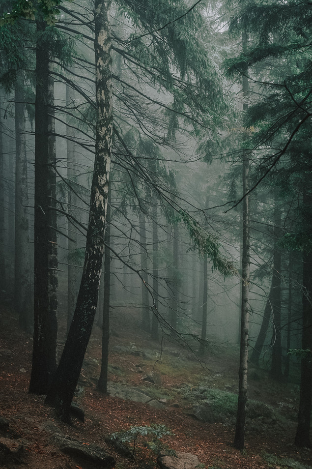 Forest lover
