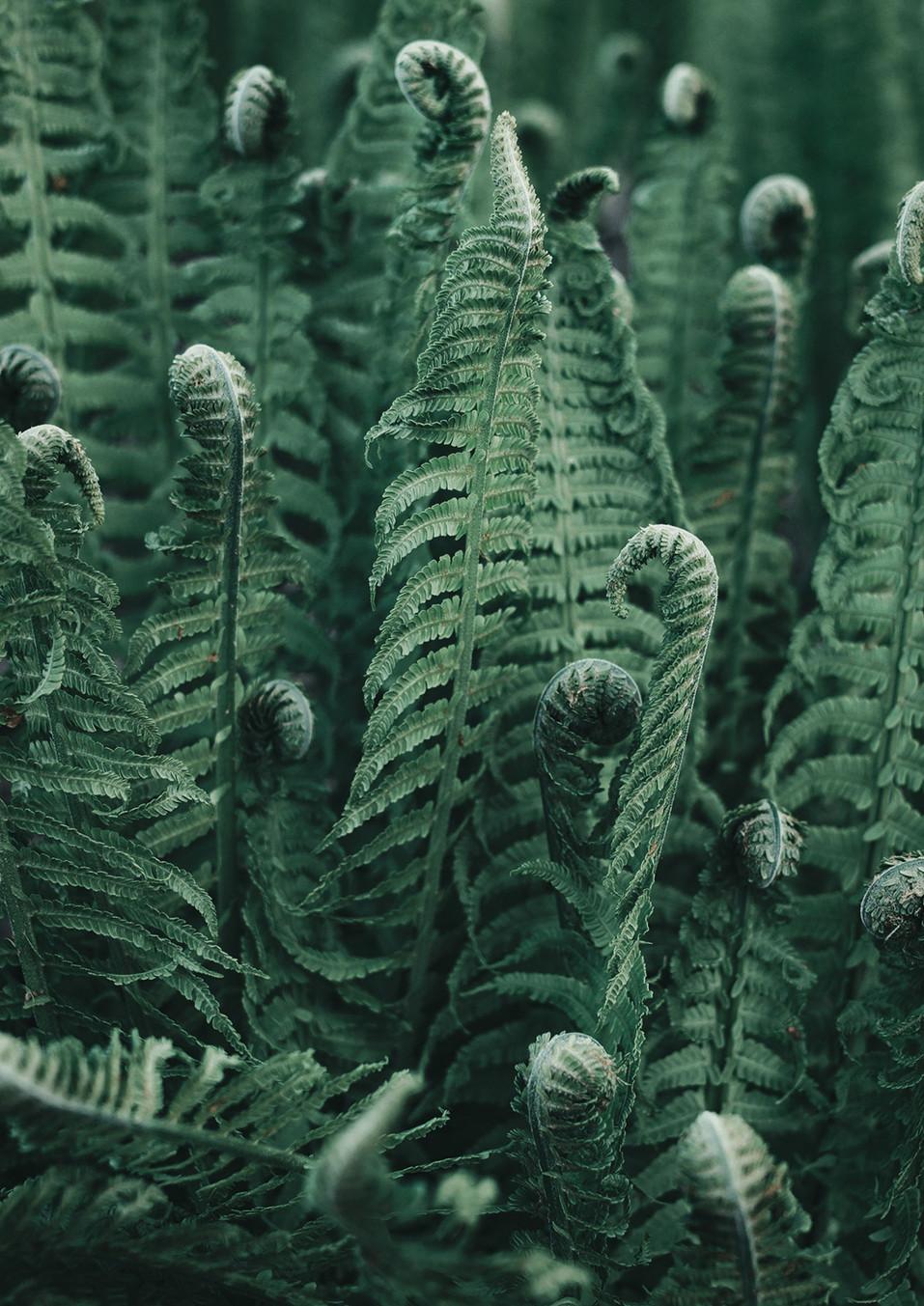 Ferns #1