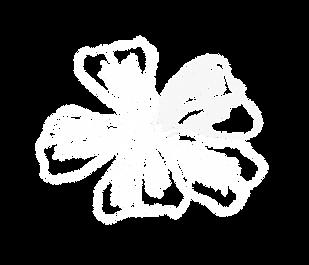Cerato Blüte im Hintergrund