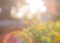 yellow-flowers-917076.jpg