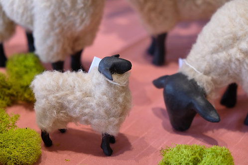 Suffolk Sheep Lamb