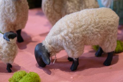 Suffolk Sheep Grazing