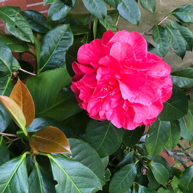 In our gardens