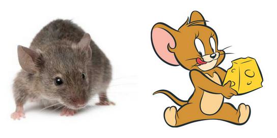 חטפתי עכברת שתישאר לנצח