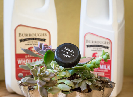 Returning to our Roots – Announcing Organic Milk from Burroughs Family Farms
