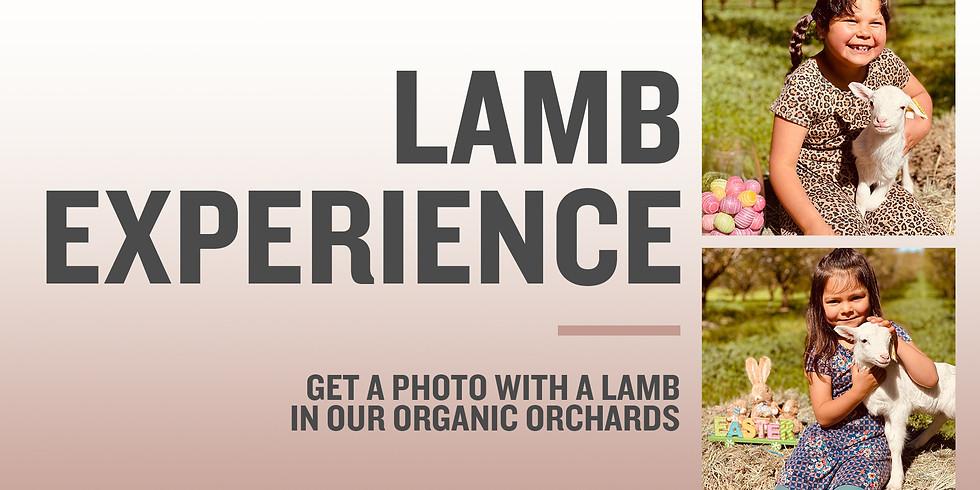 Lamb Experience with Photo   Saturday & Sunday