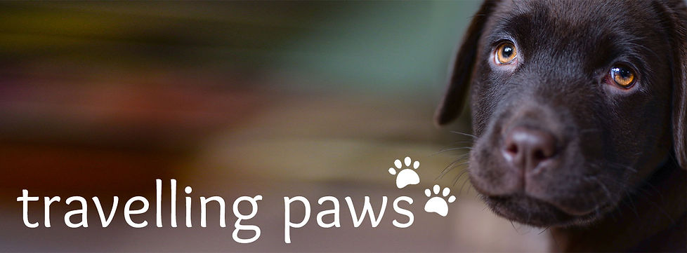 travelling paws logo with chocolate brown lab puppy