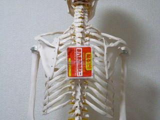 寒気がしたら☆肩甲骨の間にホッカイロ