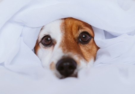 How to Remove Dog Odors from your Home
