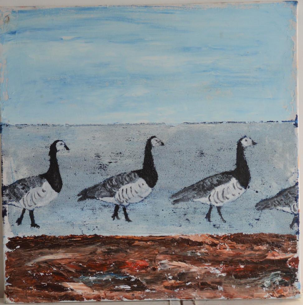 Barnacle Geese 2020