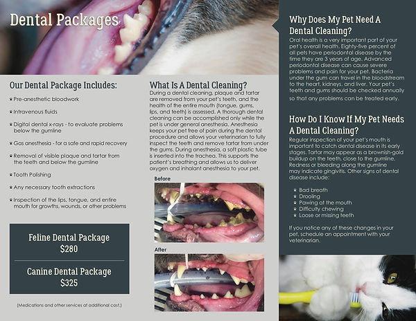 Dental Brochure 3-2020 thru 2-2021 back.